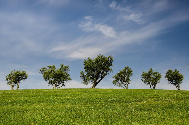 Vitago tager ansvar for miljøet - Miljøansvar